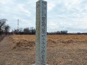 「田島が原サクラソウ自生地」草焼きの準備が進んでいます - 暢気(のんき)おやじ