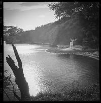 入り江に現れた大きな白い鹿 - Film&Gasoline