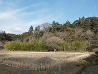 水鳥。梅の花と紋様 - 千葉県いすみ環境と文化のさとセンター
