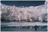 お伊勢参り(内宮) - コバチャンのBLOG