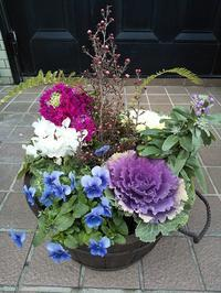 冬の花のたくましさ - 十色生活
