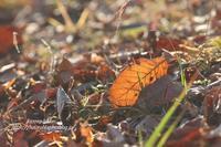 枯葉の輝き - 風の彩りー3