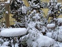 大寒波がやってきた - グリママの花日記