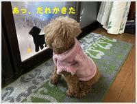 どんなに寒くても、外に出たいさくら。。。勘弁してよぉ - さくらおばちゃんの趣味悠遊