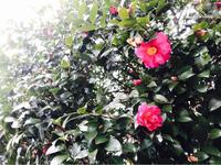 気持ちが楽になる方を選ぶ - 自然を見つめて自分と向き合う心の花