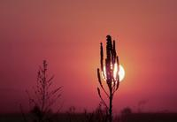 Sunrise, Sunset - IL EST TROP TARD 時は過ぎゆく ... 2