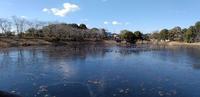 池の鴨 - がちゃぴん秀子の日記