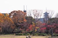 京都水族館 - Taro's Photo