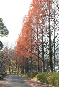 葛城市かつらぎの森紅葉 - 魅せられて大和路