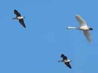 多々良沼 2021.1.7(3) - 鳥撮り遊び