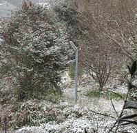 珍しい雪の日 - アガパンサス日記(ダイアリー)