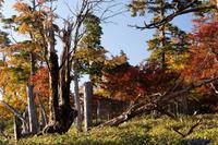 大台ケ原~紅葉を歩く - katsuのヘタッピ風景