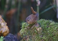 苔の上で、、 - ぶらり探鳥
