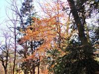 受験のおまもり~ヤマコウバシ~ - 里山の四季