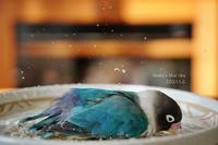 水浴びB.Bの記録(続1月2日・4日と、サラダバーにて) - FUNKY'S BLUE SKY