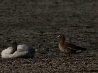 多々良沼 2021.1.7(4) - 鳥撮り遊び