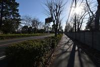 南大通り直線道路 - ひのきよ