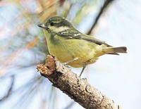 2021年は迷鳥から - ゆるゆる野鳥観察日記