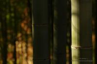 公園の竹林 - It's only photo 2