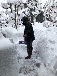 またまた大雪です。 - 秋田 蕗だより