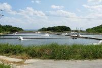 [今日の1枚]沖縄は車エビ養殖が盛んです。 - 沖縄発-リーマン経営診断トラベラー ~俺流はこれだ~