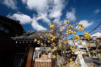 早春の香り蝋梅@かましきさん(勝念寺) - デジタルな鍛冶屋の写真歩記