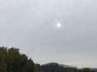 白い太陽、金の太陽 - マリカの野草画帖