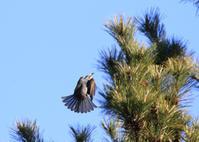 近くの公園にて・・・ - 岡崎野鳥写真館