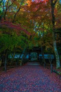 2020京都紅葉~地蔵院 - 鏡花水月