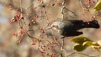 寒中お見舞い2021 - 山と鳥を愛するアナパパ
