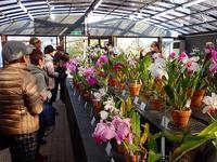 バナナのつぼみ - 手柄山温室植物園ブログ 『山の上から花だより』