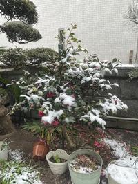 初雪 - ももちゃん大好き♪
