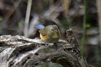 A公園の鳥 - そらと林と鳥