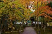 地蔵院 - Deep Season