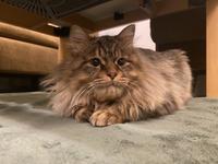 ウチの猫 - Bd-home style