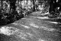 林道 - のっとこ