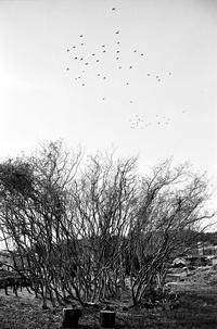 鳥たち - のっとこ