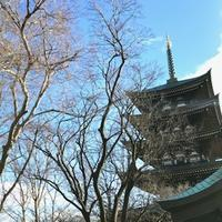 冬の木々 - 緑のしずく (ベランダガーデン便り)