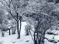 十里木高原@この冬初めての雪景色 - 小粋な道草ブログ