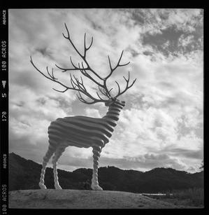 White Deer - Film&Gasoline
