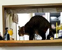 水 - キジトラ猫のトラちゃんダイアリー
