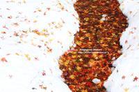 紅葉の河 - 流れのほとり