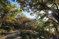 大台ケ原~透過する光 - katsuのヘタッピ風景