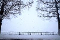 今朝は京都市内もうっすら雪化粧。 - 京都を中心に山口真一写真事務所は、七五三・お宮参りの記念撮影・年賀状用写真・ペット写真等、撮ります!