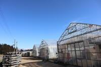 大雪もひと休み - ユリ 百合 ゆり 魚沼農場の日々