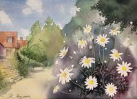 マーガレットの咲く道 - 青山一樹 スケッチ画のひととき