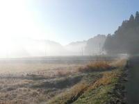もやの朝。昼間にキョン - 千葉県いすみ環境と文化のさとセンター