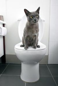 あんな馬鹿なやつ(*`艸´)★トイレの蓋 - 月夜飛行船2