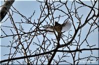 羽ばたき(野幌森林公園) - 北海道photo一撮り旅