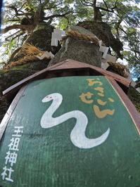 玉祖神社(たまおやじんじゃ)大阪府 - ty4834 四季の写真Ⅱ